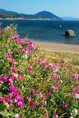 Flowers on the Coast — Stock Photo