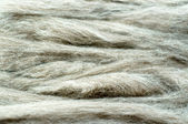 Gray wool background — Stock Photo