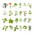 Herb Flower and Leaf Collection - Stock Photo