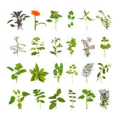 Herb Flower and Leaf Collection — Stock Photo