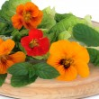 Nasturtian  Flower and Herb Salad - Stock Photo
