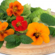 Nasturtian Flower and Herb Salad — Stockfoto