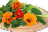 Nasturtian Flower and Herb Salad — Stock Photo