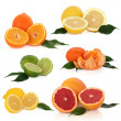 Citrus Fruit Collection — Stock Photo #1982195