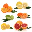 Citrus Fruit Collection — Stock Photo