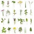 Herb Leaf and Flower Collection — Stock Photo
