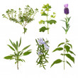 Herb Leaf Selection — Foto de Stock