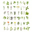 Large Herb Leaf and Flower Collection - Stock Photo