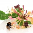 Honeysuckle Flower and Bee — Stock Photo