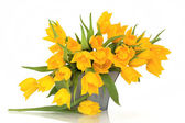 Yellow Tulip Flowers — Stock Photo