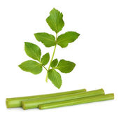 Angelica Herb Leaf and Stems — Stock Photo