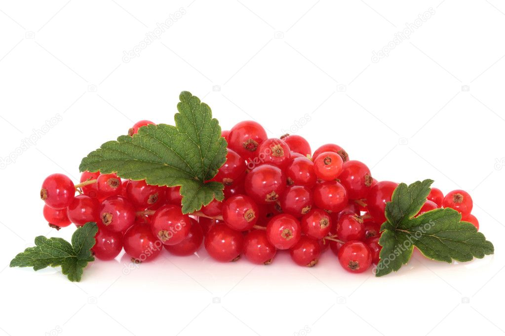 Redcurrant fruit with leaf sprigs, isolated over white background. — Stock Photo #1982410