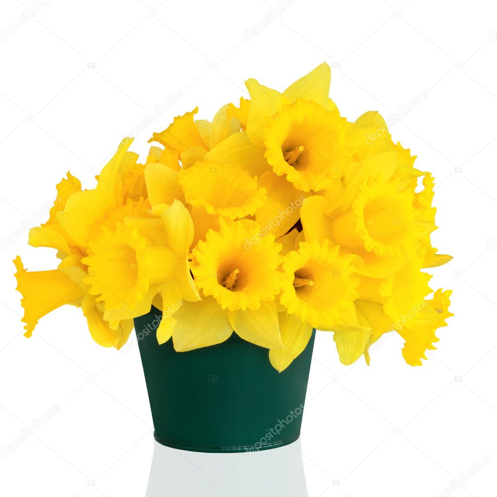 Daffodil flowers in a green metal vase, isolated over white background.  Stock Photo #1986561