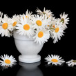 Daisy Flower Beauty — Stock Photo