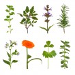 Herb Leaf and Flower Selection — Stock Photo