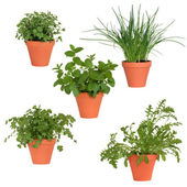 Herbs in Pots — Stock Photo