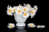 Daisy Flower Beauty — Stock Photo