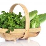 Lettuce Varieties in Rustic Basket — Stock Photo #2024830