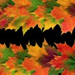 Autumn Leaf Abstract - Foto Stock