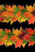 Autumn Leaf Abstract — Stock Photo