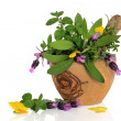 Healing Herbs and Flowers — Stock Photo