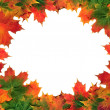 Maple Leaf Abstract Frame - Foto Stock