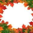 Maple Leaf Abstract Frame - Stock Photo