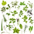 Large Herb Leaf Selection — Foto Stock