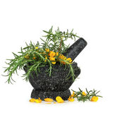 Rosemary Herb and Gorse Flowers — Stock Photo