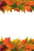 Autumn Leaf Beauty — Stock Photo