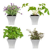 18.Herbs in Pots — Stock Photo