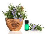 Medicinal and Culinary Herbs — Stock Photo