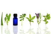 Herbs for Healing — Stock Photo