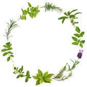 Foglie di erbe medicinali e culinarie — Foto Stock