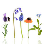 Bumblebees and Flowers — Stock Photo