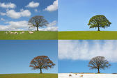 Four Seasons of the Oak Tree — Stock Photo