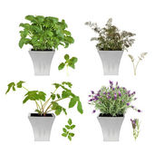 Herb Collection in Pots — Stock Photo
