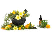Wild Flower and Herb Therapy — Stock Photo