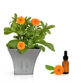 Calendula Flowers and Essence — Stock Photo
