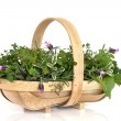 Basket of Fresh Herbs — Stock Photo