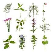 Herb Leaf Variety — Stock Photo