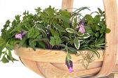 Fresh Herb Leaf Selection — Stock Photo