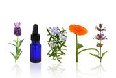 Aromatherapy Herbs and Flowers — Stock Photo