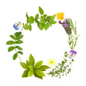Herb Leaf and Floral Garland — Stock Photo