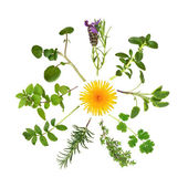 Herb and Wild Flower Abstract — Stock Photo