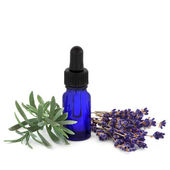 Lavender Herb Essence — Stock Photo