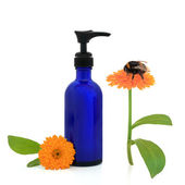 Marigold Cream and Bumblebee — Stock Photo