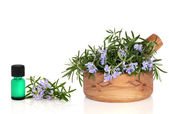 Rosemary Herb and Essence — Stock Photo