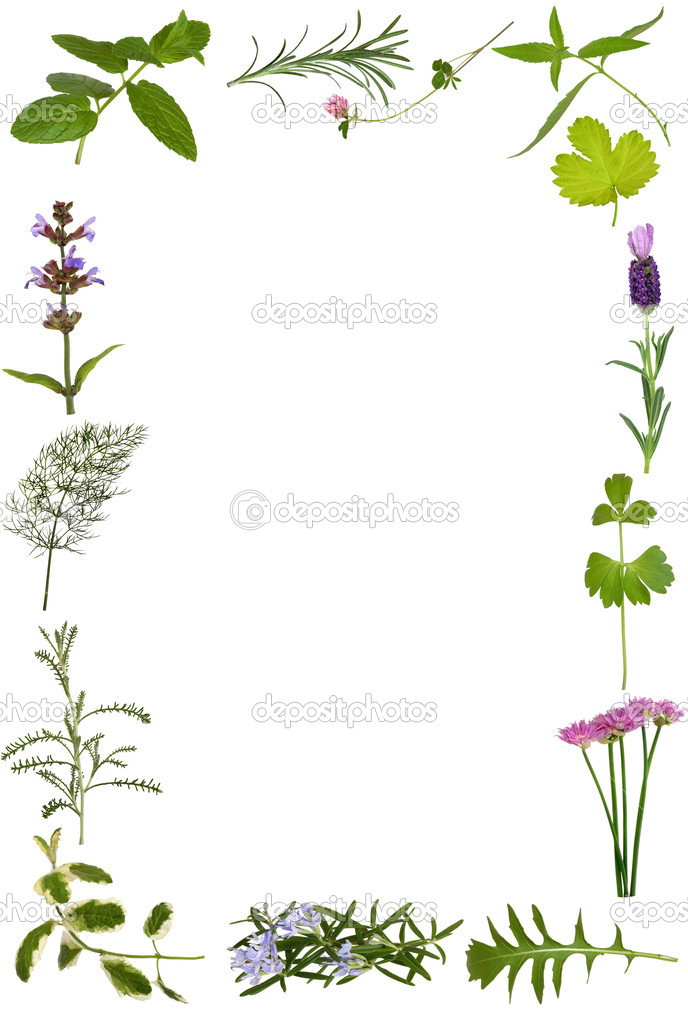 herbs wallpaper border - photo #24