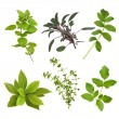 Herb Leaf Selection - Stock Photo